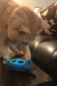 A cat uses its claws to hit a mouse shaped toy that is full of kibble