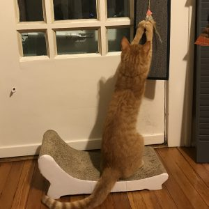 A cat sits on a cardboard scratcher while scratching a carpet scratcher hanging from a doorknob.