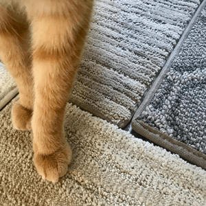 Four carpet samples are arranged together, with a cat standing on them.
