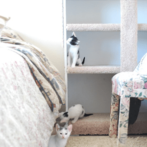 Three kittens play on a inset bookshelf that has been completely covered in carpet.