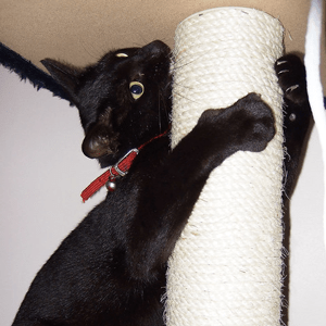 A kitten attacks a scratching post, wrapping its arms around it and biting it.