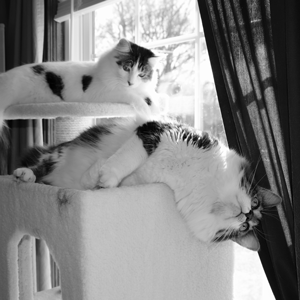Two cats lay on a cat tree, there is a wide fabric walled cubby for hiding and scratching.