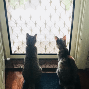 Two cats sit looking through a glass door.