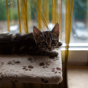 A kitten sits on a cat tree with a window view.