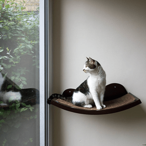 A cat looks out the window while sitting on a shelf window seat.