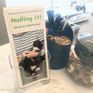 Nailing It – Pamphlet